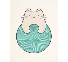 knit cat Photographic Print