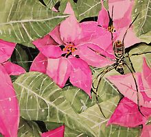 Spider over pink flowers by Christopher Strong