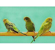 Keets X 3 © Photographic Print
