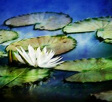 Lily Pond Queen Impression by Darlene Lankford Honeycutt