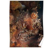 Maori Octopus. Poster