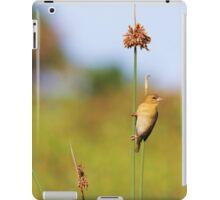 Cape Weaver  iPad Case/Skin