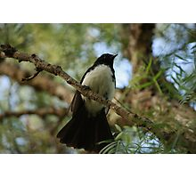 Wagtail in the Brush Photographic Print