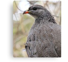 Spur Fowl Canvas Print