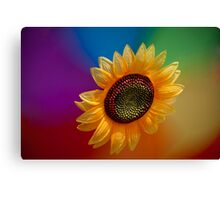 Sunflower-high Canvas Print