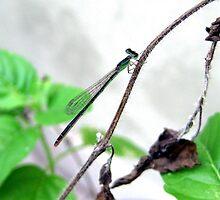 Biotic Toothpick by Sudhir Gahlot