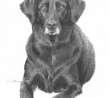 black labrador resting drawing by Mike Theuer