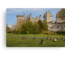 Dromoland Castle Duck walk! Canvas Print