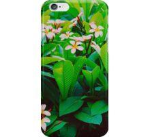 tropical pink frangipani tree  iPhone Case/Skin