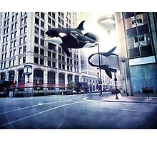 City of whales Photographic Print
