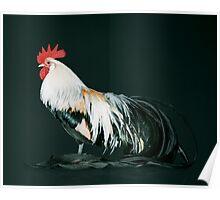 Golden Phoenix Cock Poster