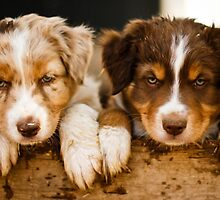 Puppies by Jackie Popp