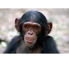 Little Chimp Photographic Print