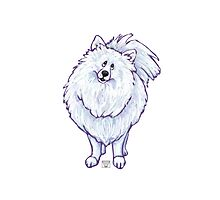 Animal Parade White Pomeranian Photographic Print