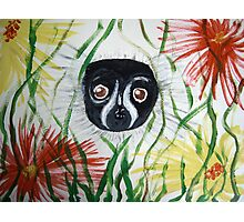 Black and White Ruffed Lemur Photographic Print