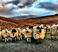 Achill Community Watch by Polly x