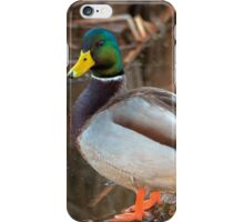 Male Mallard Duck iPhone Case/Skin