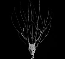 Deer Skull with a Crown of Branches by TrueNoire