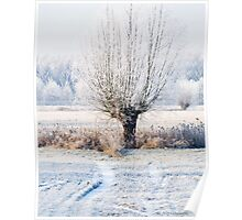 winter white willow (www) Poster
