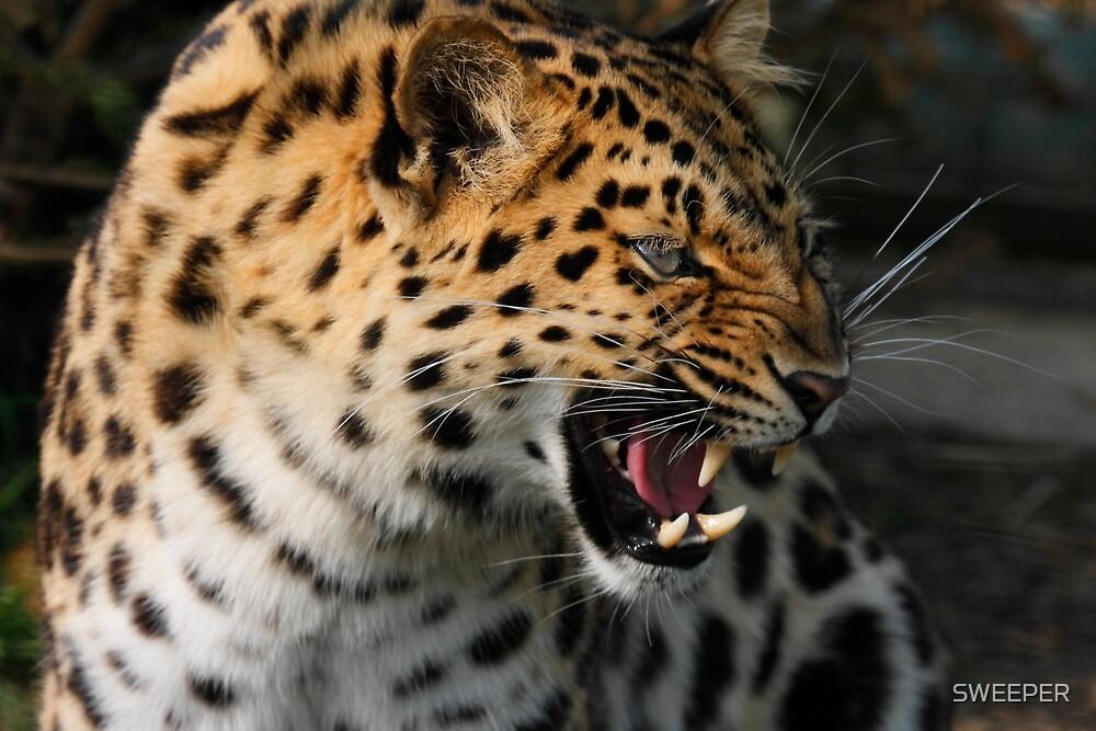 angry baby cheetah - photo #45