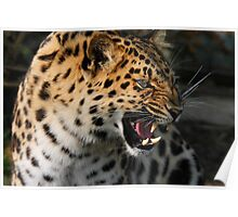 Angry Leopard Poster