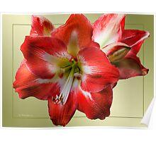 Red Petals~ Poster