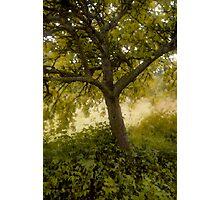 Pastel Tree Photographic Print