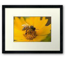 Zen Gardener Framed Print