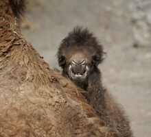 cheeky smile by Fran E.