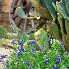 Texas Flower Bed by courier