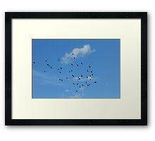 Birds migration Framed Print