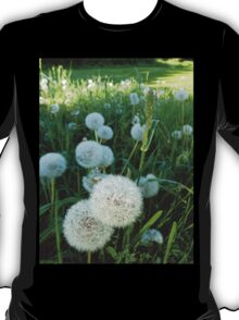 Dandelion Seed Heads In Our Pasture  T-Shirt
