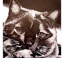 Scratchboard Cat Photographic Print