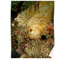 Leaf Scorpionfish (2) Poster