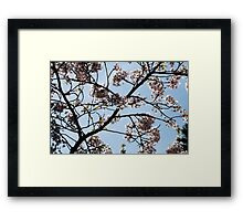 Spring in London Framed Print