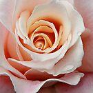Plush Pink by JoMann