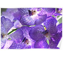 Orchids -Close Up Poster