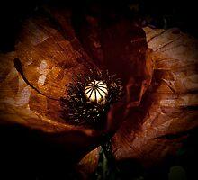 Poppy Heart by Stefano Fantini
