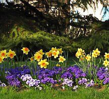 daffodils by Eyeprod