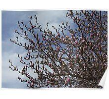 Magnolia Spray Poster