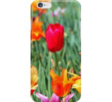 Tulips For Spring iPhone Case/Skin