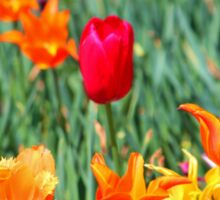 Tulips For Spring Sticker