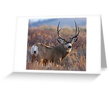 Buck, Afternoon Light in Late Fall Greeting Card