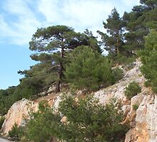 Pines by Katerina Williams-Mourouna