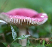 Fungi season 5 by Normf