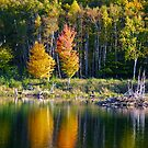 Autumn Reflections by Christopher Bookholt