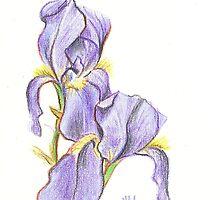 Lavender Flowers by KipDeVore