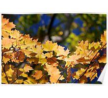 Leaf Arch Poster