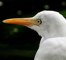 Beauty is in the eye of the beholder..Great Egret by sandysartstudio