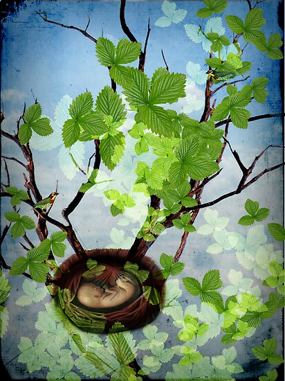 Lost and found by Catrin Welz-Stein